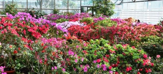 Національний ботанічний сад ім.М.М.Гришка запрошує!